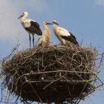 Az enyhe tél is veszélyes lehet a madárvilág számára